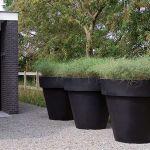 huge black flower pots with grasses