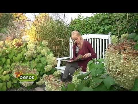 Ogród bez tajemnic ,,Wrzosowisko'' - YouTube