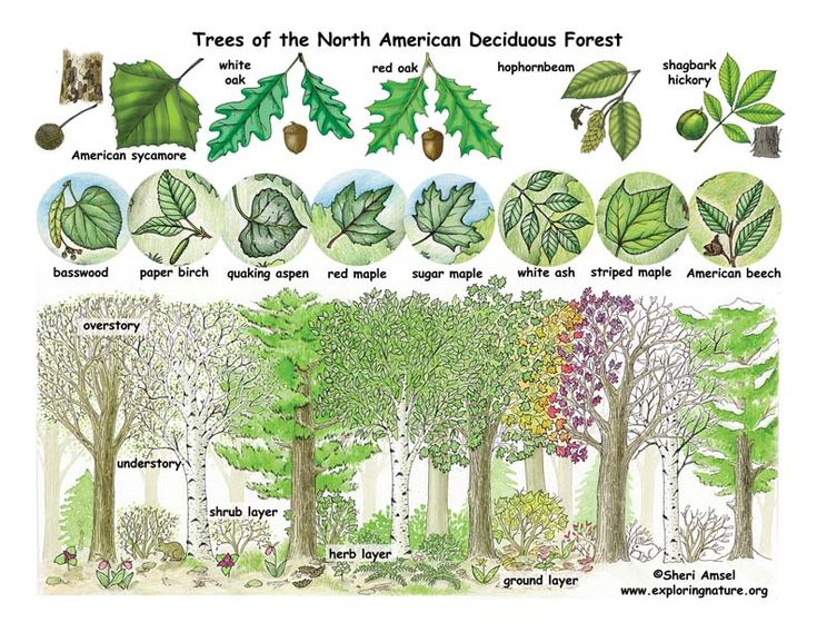 70 Best Images About Teach Me About Trees On Pinterest