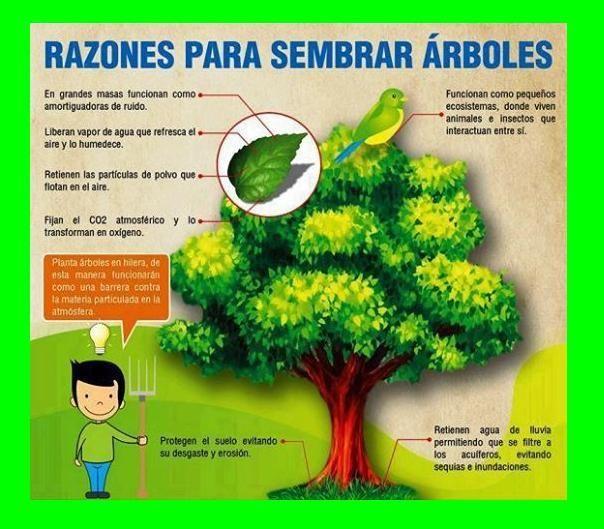 Razones para sembrar árboles.