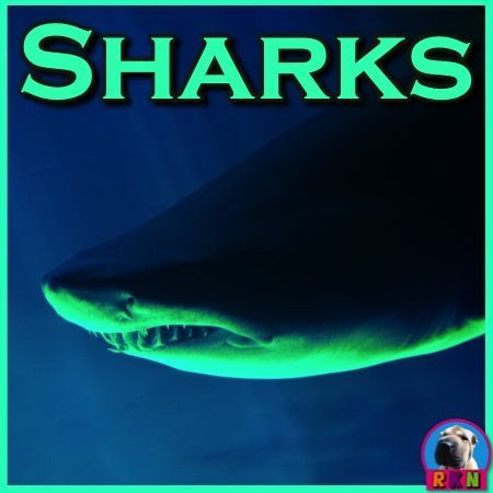 Sharks PowerPoint and Activities:  Learn all about sharks in this interactive PPT presentation. This nonfiction resource about sharks is full of information, photos, illustrations, videos, riddles, and fun facts. It�s designed for teachers, students, and parents! When it's over, challenge the kids with some higher level thinking activities. by Ryan Nygren (photo by Raul Carrillo Garrido - https://www.flickr.com/photos/metsuke_es/3809794974