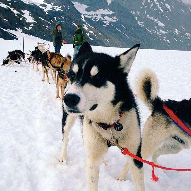 Palmer, Alaska. Dogsledding!