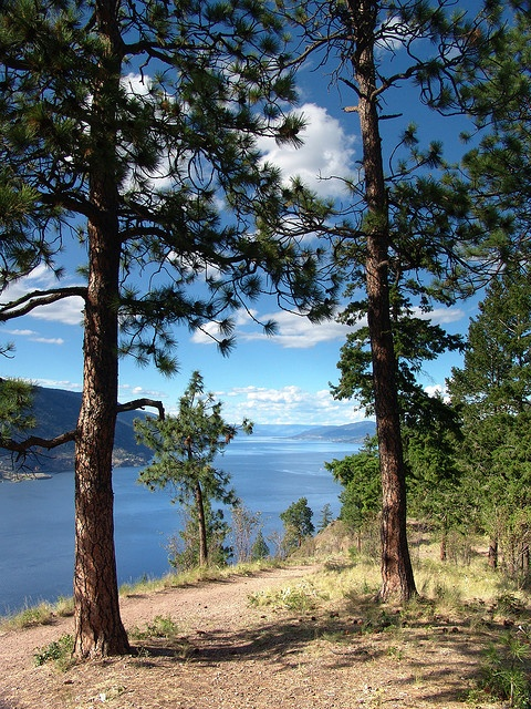 Okanagan Lake, from Knox Mountain Park, BC. #accommodation in Kelowna: www.lakeviewmemories.com
