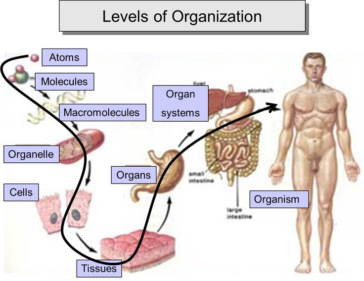 Group Of Cells That Carry Out A Specific Function 64