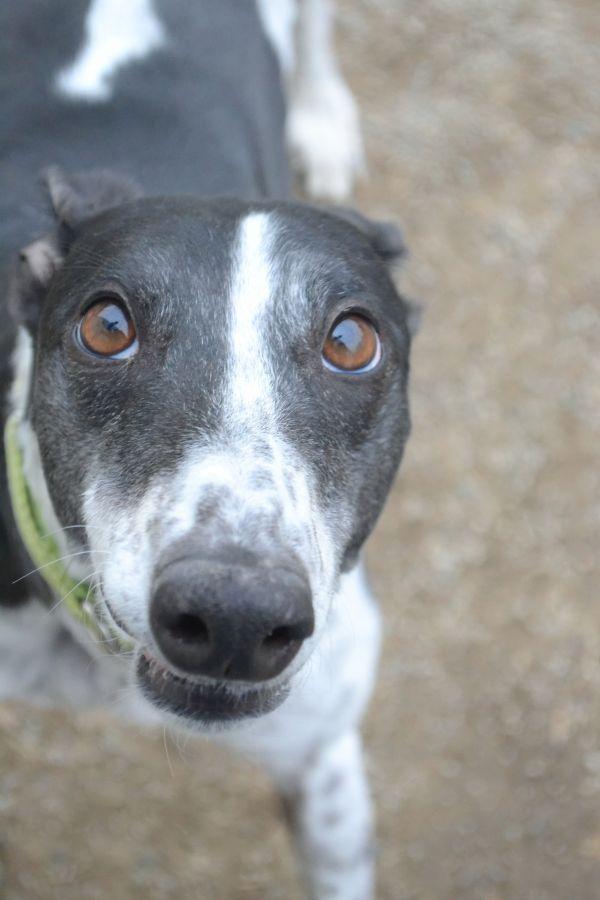 Dogs For Adoption Near Medina Oh Petfinder