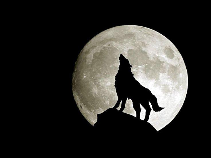 Uivando à lua cheia HD                                                                                                                                                                                 Mais
