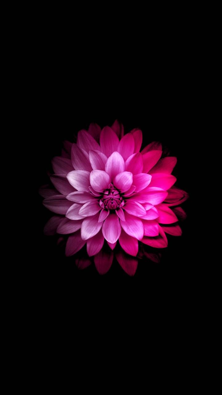 Pink Flower Wallpaper By Givenchy 10 Free On Zedge Pink Flowers Wallpaper Flower Iphone Wallpaper Flower Phone Wallpaper
