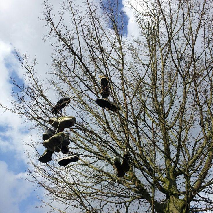 Mooie schoenenboom in de Dessinateurstraat - what's the sory of the shoes. Zie FB Textielplein Tilburg (voor de sfeer )