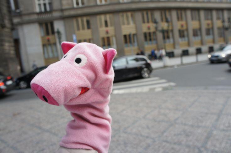 To jsem já, roztomilé prasátečko #prasatko #piggy