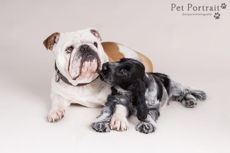 Hondenfotografie Hillegom - Foto van de Dier & Baasje fotoshoot voor Engelse Bulldog Toby en Cocker Spaniel pup Bommel