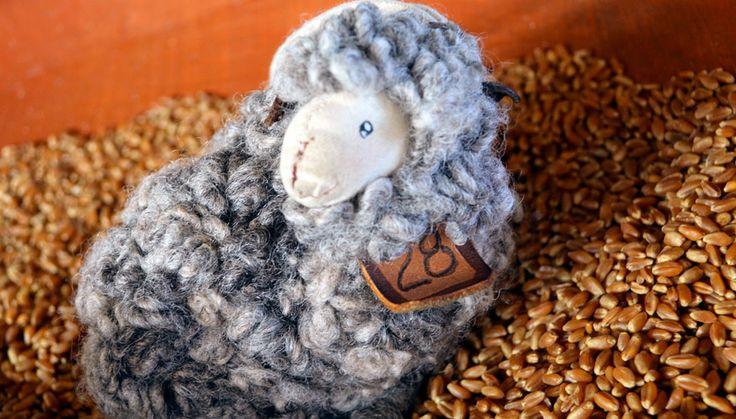 #PuertoNatales, sheep - Setours ©