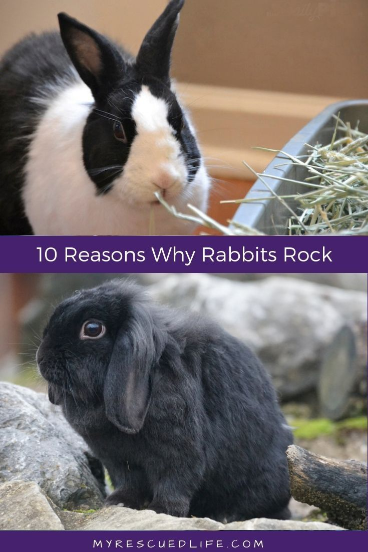 10 Reasons Why Rescue Rabbits Rock Pet Rabbit Pet Mice Pet Rabbit Care