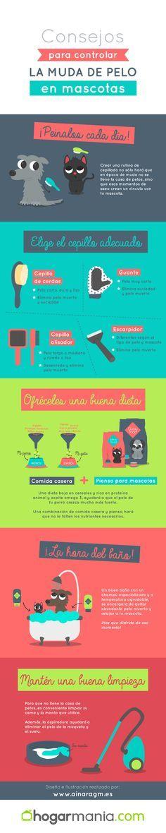 Consejos para controlar la muda de pelo en mascotas. #Infografia #diseno #ilustracion