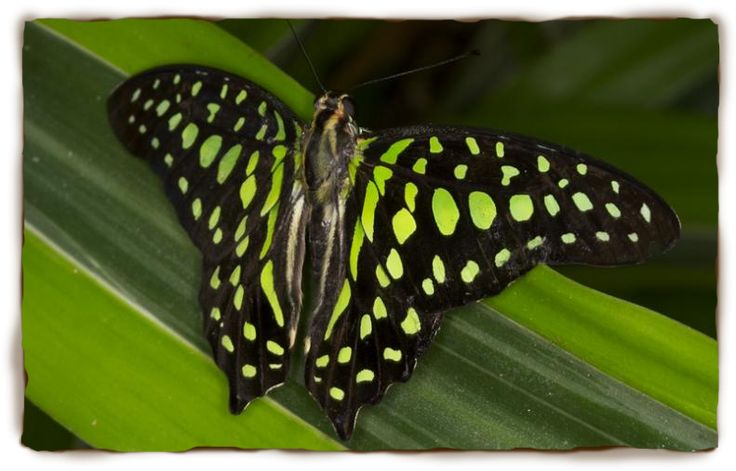 Butterfly Facts For Kids: Butterfly Pictures, Butterfly Information | San Diego Zoo - Kids | San Diego Zoo - Kids