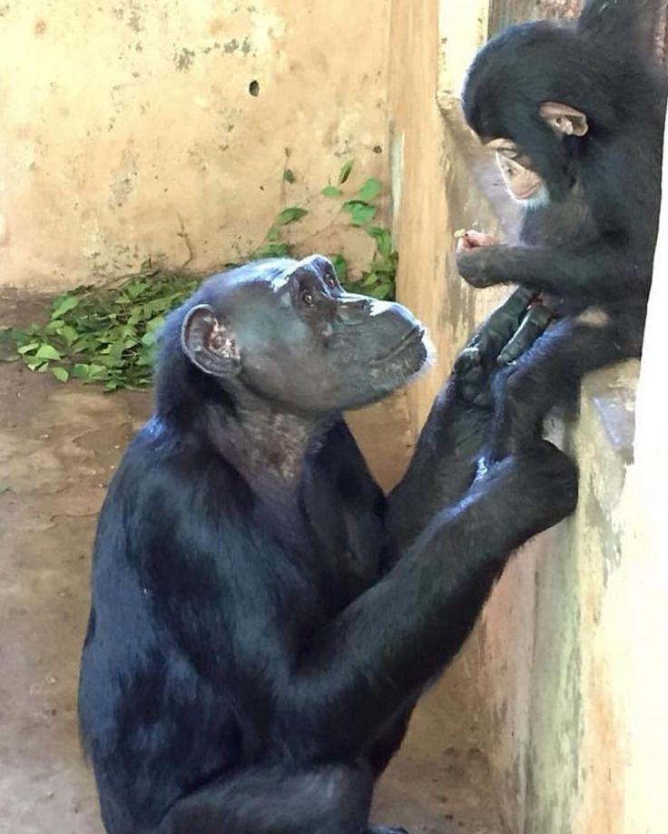 Ein Blick der reinen Liebe ❤️ #Repost @tacugama ・ ・ ・ Nach der Aufrechterhal …