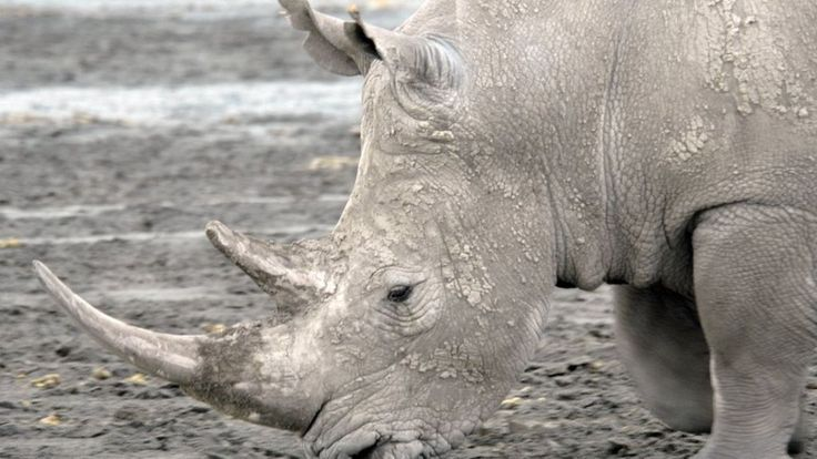 Four experts put forward proposals to help tackle the trade in rhino horn which threatens the species' survival.