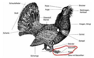 Jägerprüfung -> Sachgebiet 4: Jagdliche Praxis, Hege, Wildkrankheiten