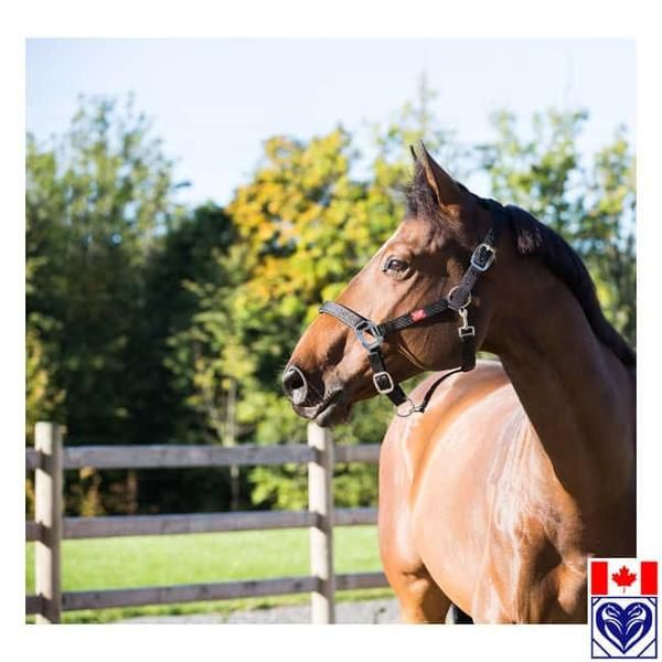 Halter - Horze Adjustable Padded Halter from Horses are Expensive