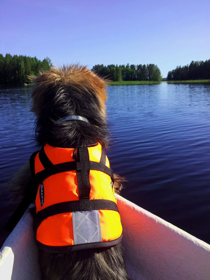 Captain of the boat, Australian Terrier Nipsu, enjoying the views in Southern Porvoo. Remember to bring life jacket for your best friend, too. Aye aye, woof woof!! www.visitporvoo.fi