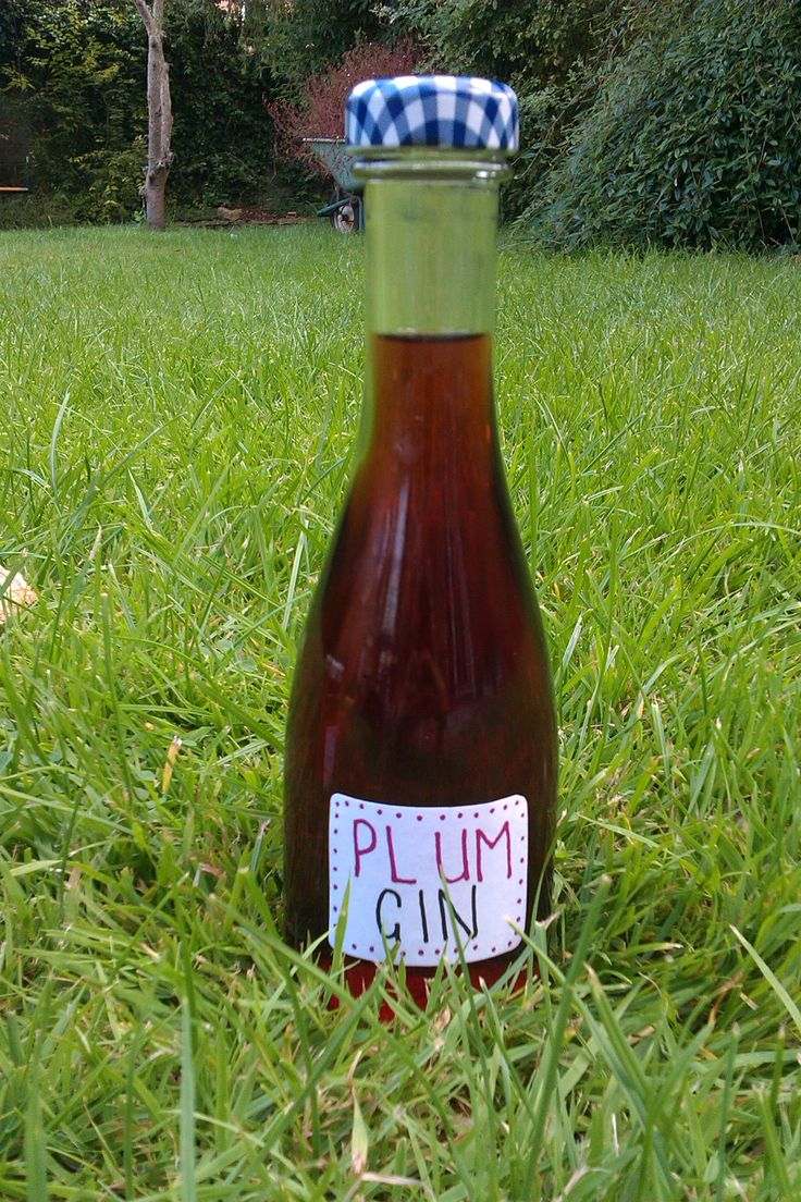 Wild plum gin with recipe