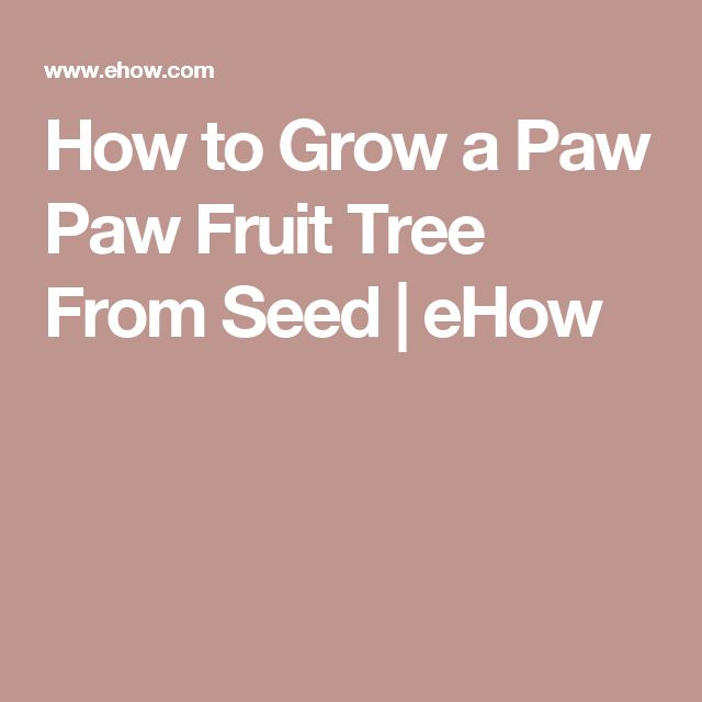How to Grow a Paw Paw Fruit Tree From Seed | eHow