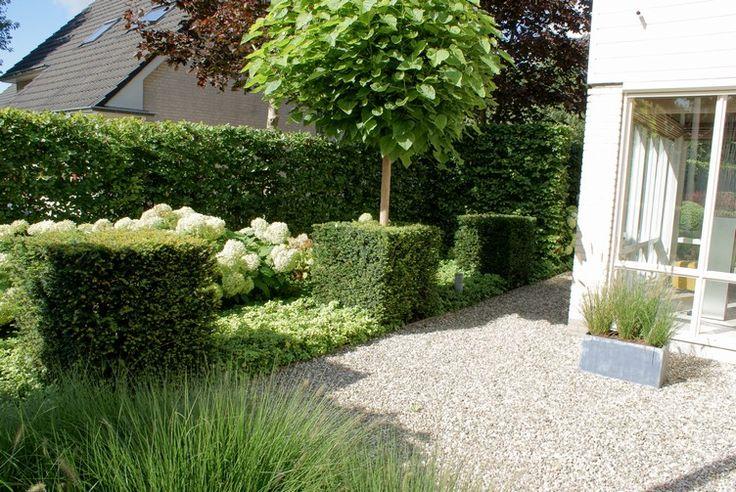bolacacia, vierkante taxus en witte hortensia;s
