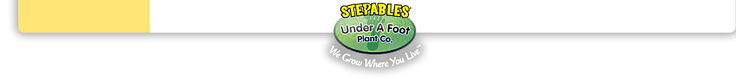 Stepables plants. Website has a great plant search feature. My ideal garden would have all living plant mulch, like these great little stepables plants.