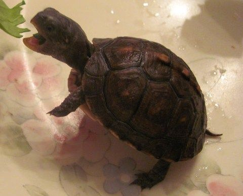 1000 Images About Tortoise And Turtles On Pinterest