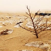 James Cuthbert. Bush and mist. Namibia. Free to use. Creative Commons