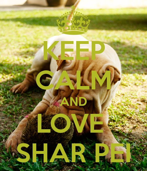 KEEP CALM AND LOVE SHAR PEi. Ohh my Maggie moo