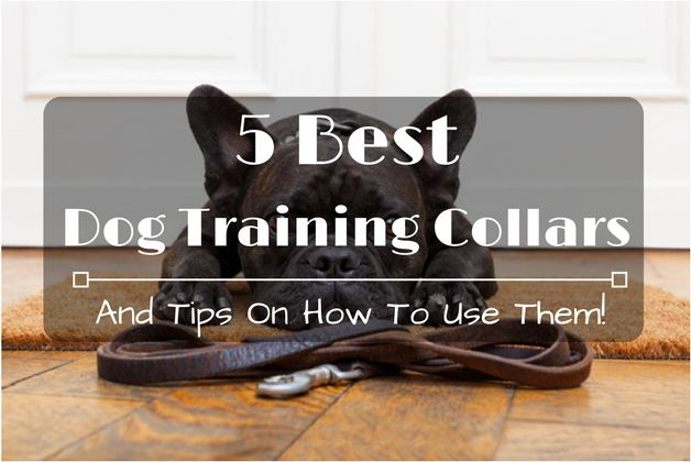 5 Best Dog Training Collars And Tips On How To Use Them