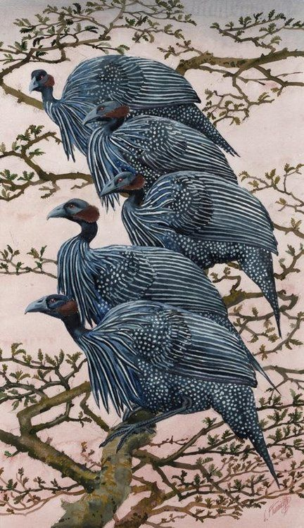 art-and-things-of-beauty: Charles Frederick Tunnicliffe (1901-1979). Vulturine Guineafowl, watercolour on paper, 67 x 38 cm.