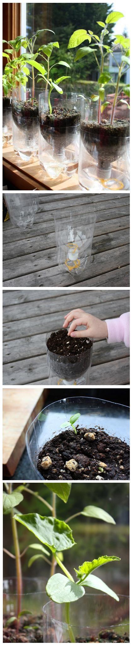 Self-Watering Seed Starter Pots | World In Green