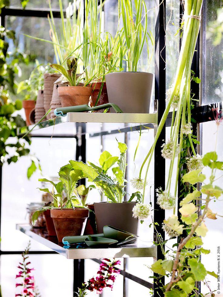 Låt skafferiet växa fram och skörda tillsammans när det är dags. ÖSTLIG kruka inom-/utomhus, GRÄSMARÖ trädgårdsset i 3 delar.