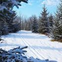 Snow Report: 2014 and 2015 Long-Range Winter Weather Forecasts U.S. Canada