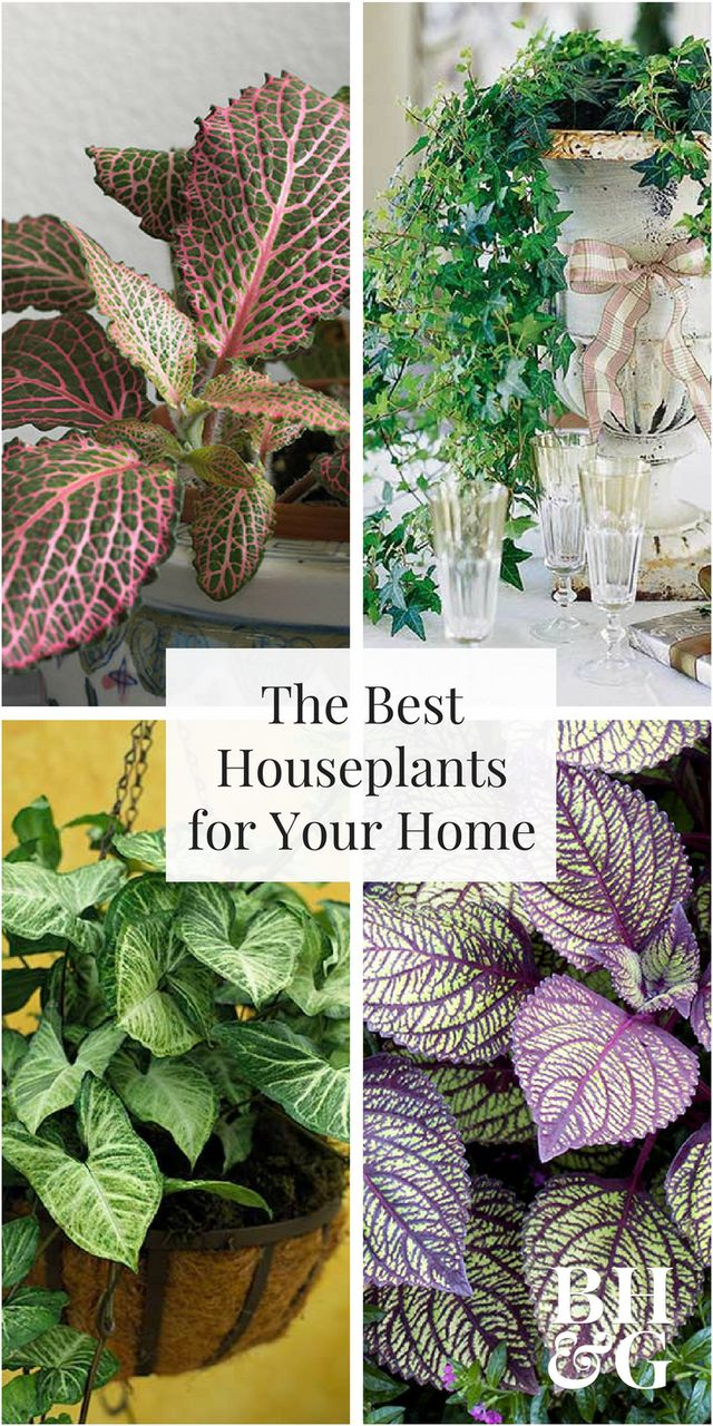 Houseplants add attractive foliage and flowers to your decor. Find the best houseplants for your home by browsing our handy guide and houseplant encyclopedia.