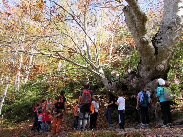 De http://p-guara.comLa selva de Hoz de Jaca  Con una magnífica red de senderos rodeados de bosques de hayas, abedules y pinos, así como excursiones cercanas a diversos picos e ibones, se trata sin duda de un magnífico punto de partida para conocer las maravillas que esconde la Comarca del Alto Gállego en cualquier época del año.