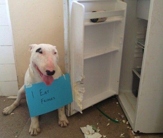 I eat fridges