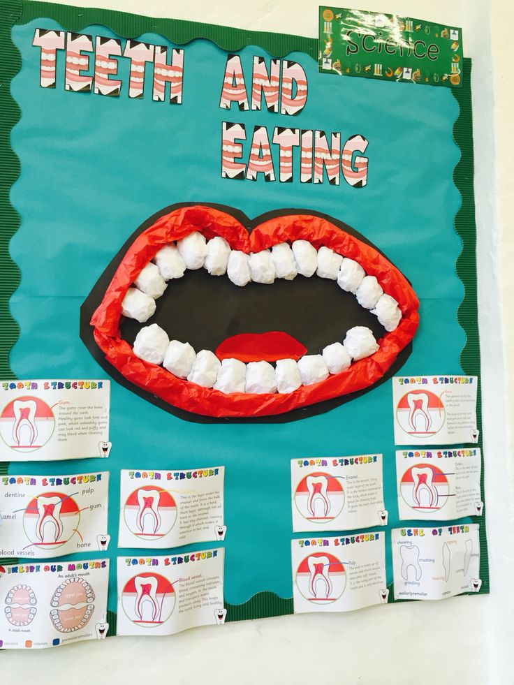 Teeth and eating KS2