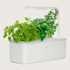 Smart Herb Garden - does all the work so you can have fresh herbs even if you have a brown thumb like me!