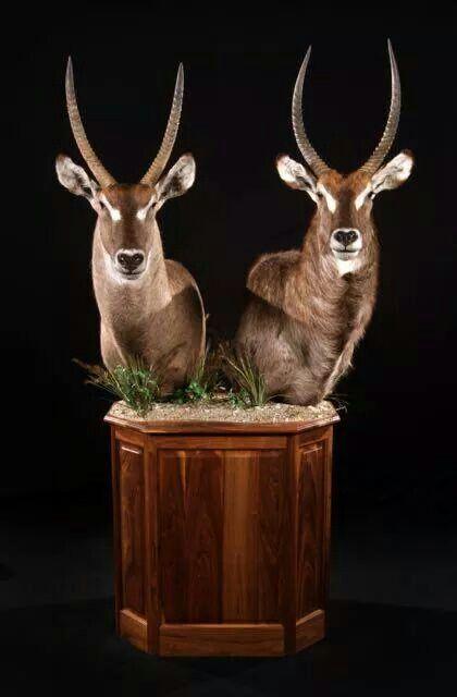 63 Best Images About Deer Mount Stands On Pinterest Deer