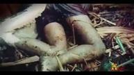 Fresh Up Guys: Man Eating Anacondas (Nature Documentary) The Gian...