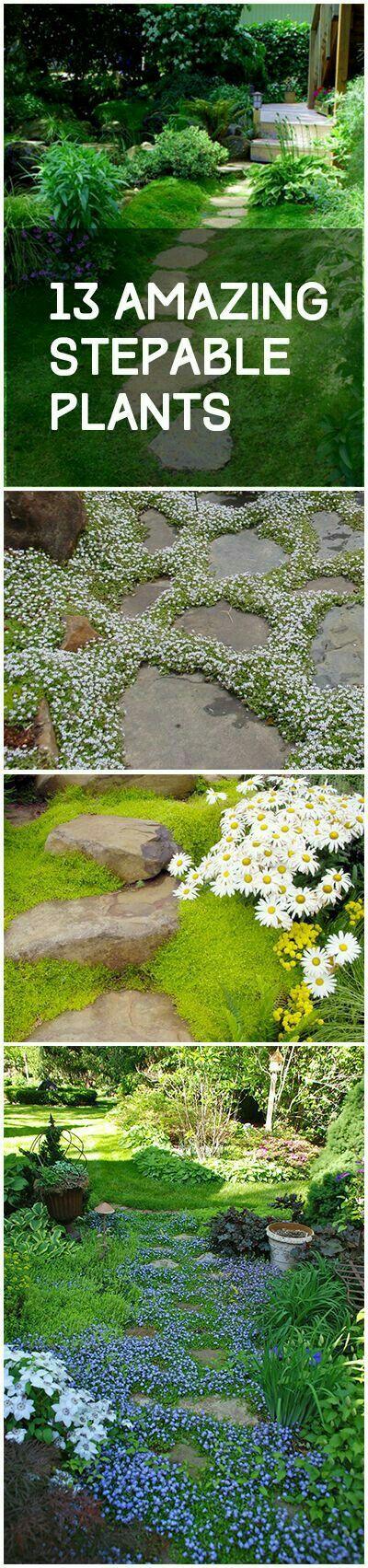 Stepable plants for the bare foot gardener