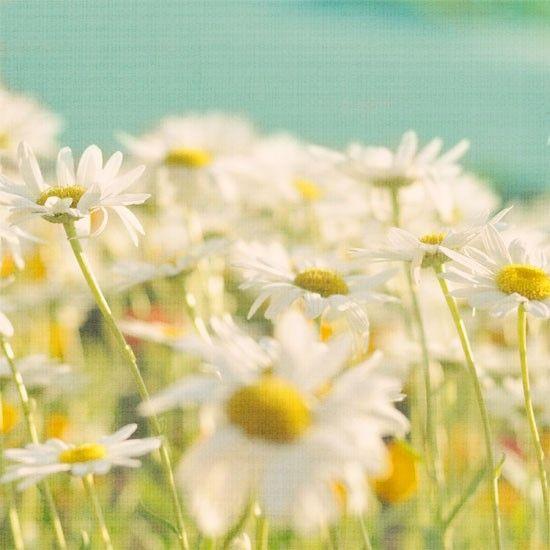 alicebgardens on etsy - yellow white green colour