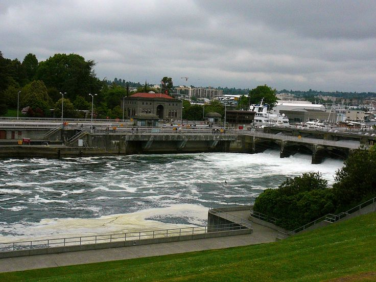 1000 images about salmon fishing on pinterest country for Ballard locks fish ladder