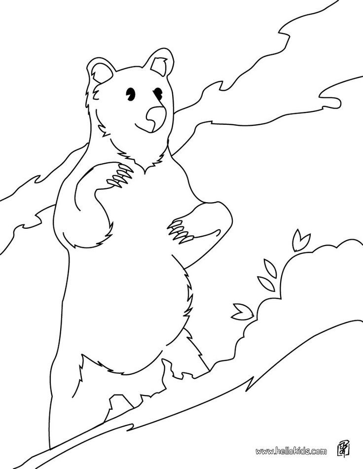 Sun Bear Coloring Page More Forest Animals Sheets On Hellokids