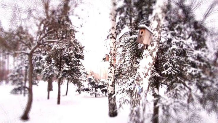 Зимняя сказка в Сталингрде!