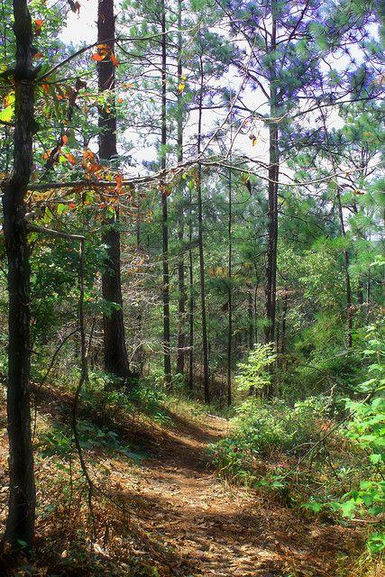 Ancient Trails on Cherokee Ridge – Lake Martin, Alabama
