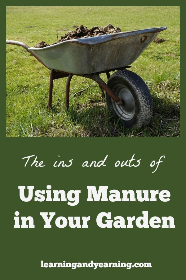 72aa69fd489fe897161211a0b0fbb2a9 - Is Composted Manure Safe For Vegetable Gardens
