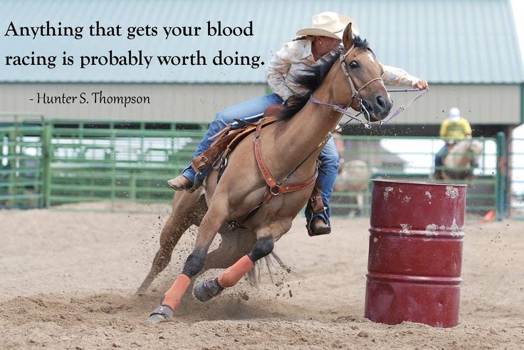 www.CV-Coaching.nl #horselover Because there is no substitute for good practice with horses.